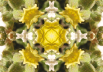 Wuestenblume-10